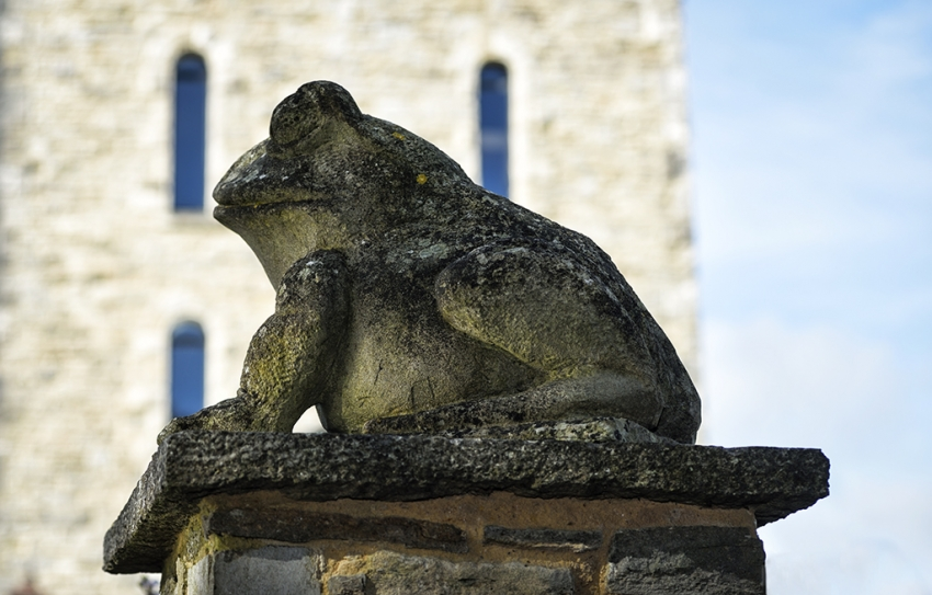 Toad at Durlston Water Tower, Swanage.