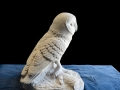 Barn owl carved in Purbeck Stone.