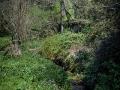 The stream next to Sandy Hill Studios, Corfe Castle.
